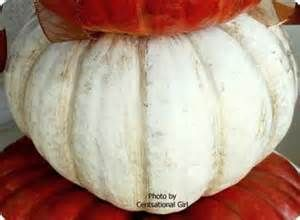 White Pumpkins - Yahoo Image Search Results
