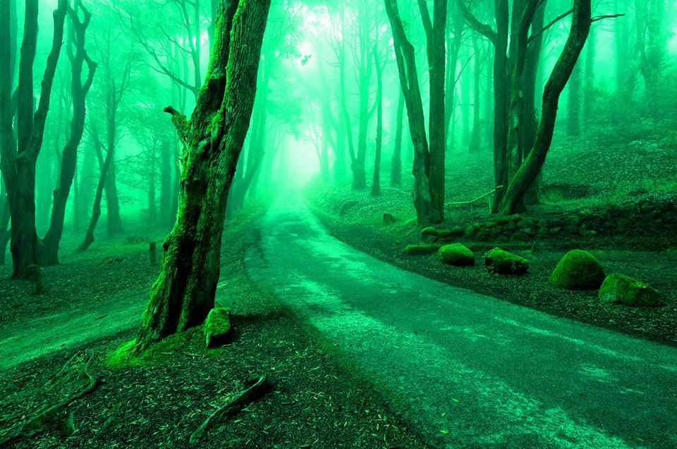 que caminho lindo