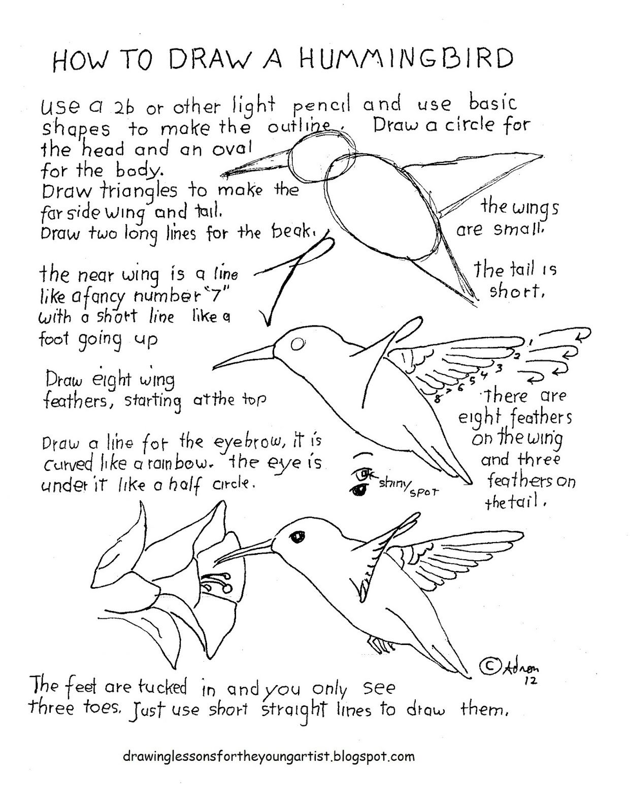 How To Draw Worksheets For The Young Artist How To Draw A Hummingbird Lesson With Worksheet