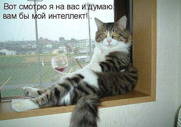 Смешные фото кошек, Смешные фотографии кошек и Самые милые ...