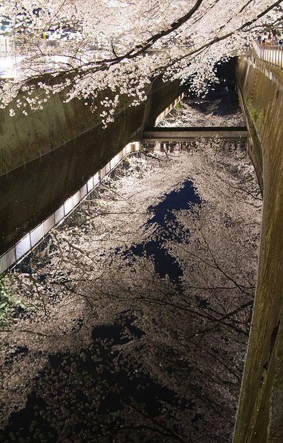 川面に映る桜,Japan