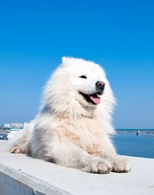 Pin On 25 Best Dog Breeds