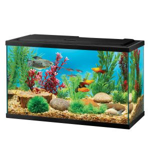 Top Fin 5 5 Gal Aquarium Starter Kit Petsmart 31 For
