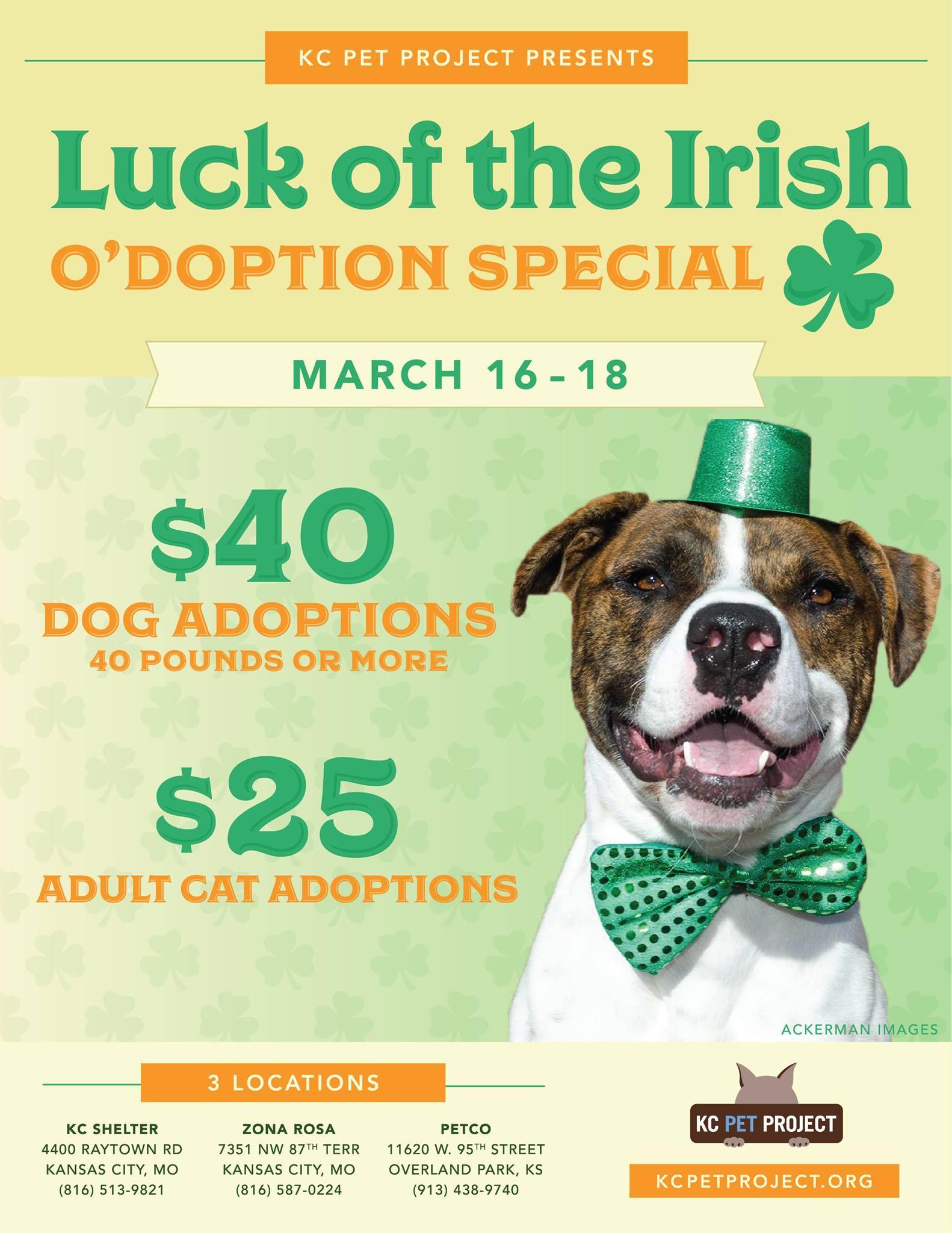 Pin by Jennifer Sigmon on adoption event Pet adoption