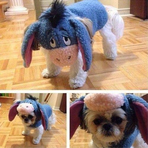 Shih Tzu Eeyore Costume Dog Costumes Funny Dog Costume Disney