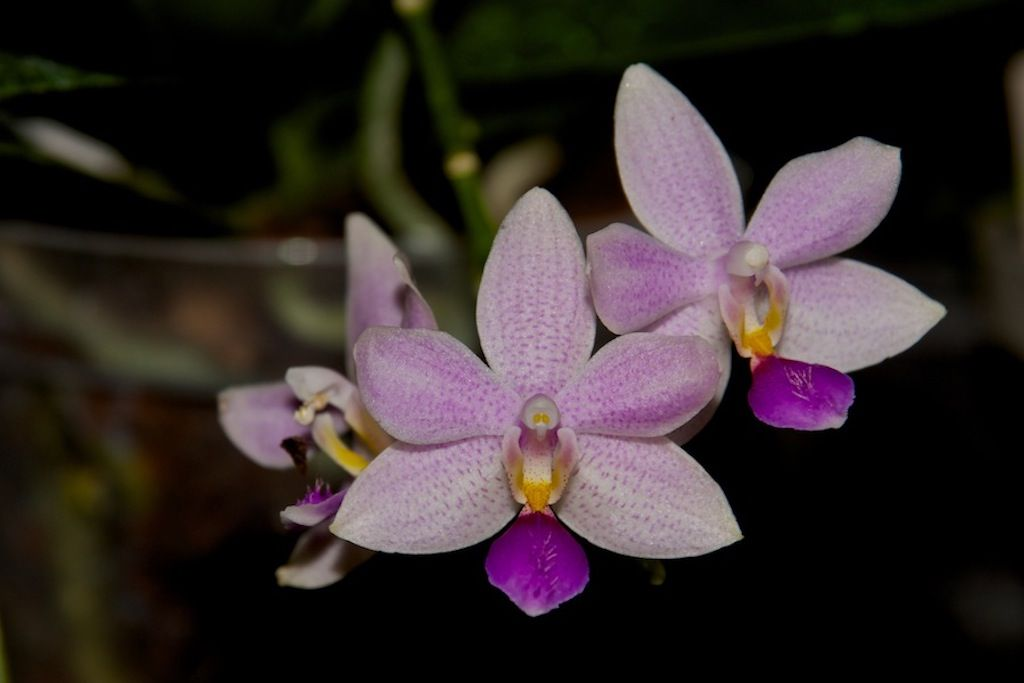Orchideen Dünger