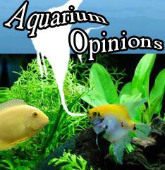 Photo of Check out the expert opinions. aquariumopinions….