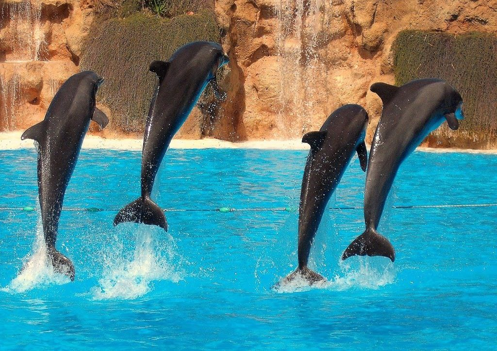 Flying dolphins!