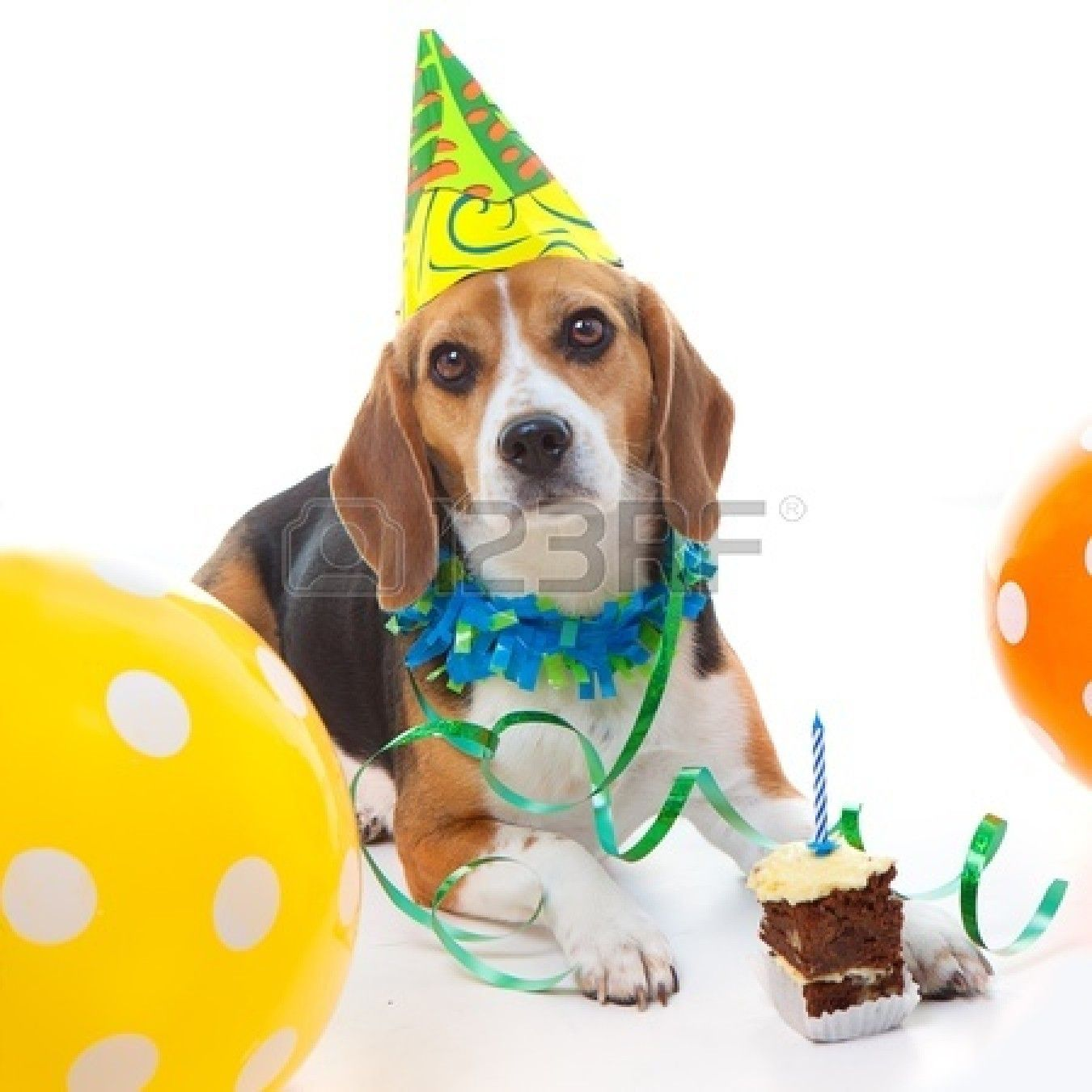 Pet Beagle Dog First Birthday Party Celebration With Cake Hat Happy Birthday Dog Dog First Birthday Dog Birthday
