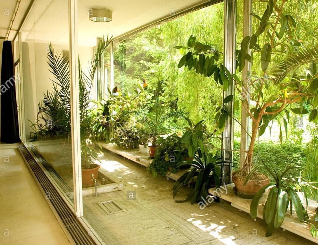the winter garden of mies van der rohe u0027s villa tugendhat 1928