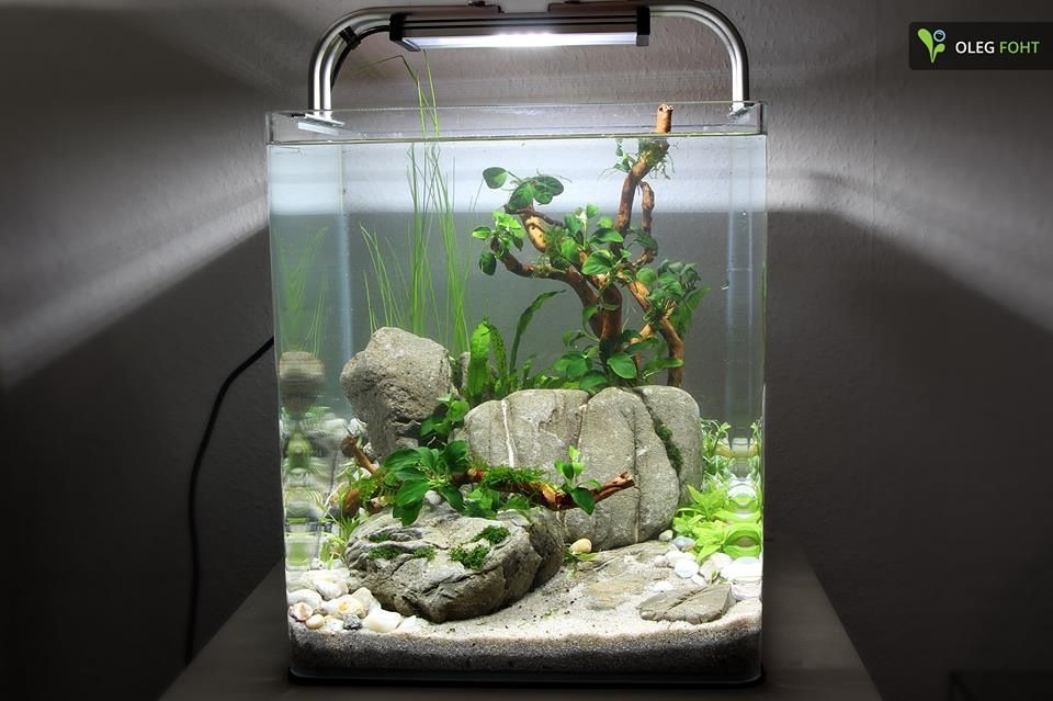 30 liter nano directly after set up aquascaping for Aquarium nano cube