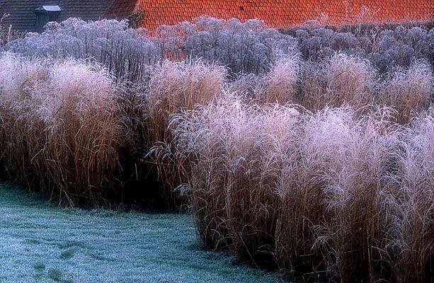 Frost in le jardin plume