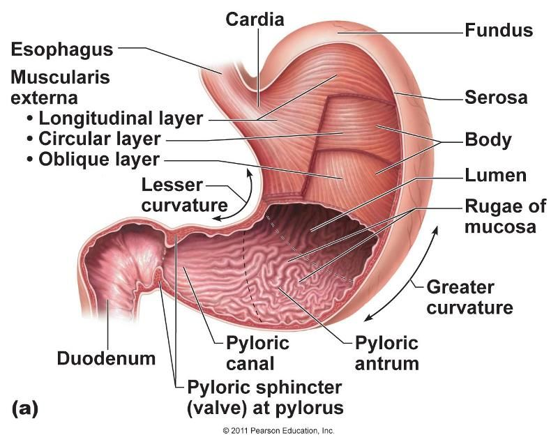 Small and large intestine pictures google search anatomy pinterest small and large intestine pictures google search ccuart Image collections