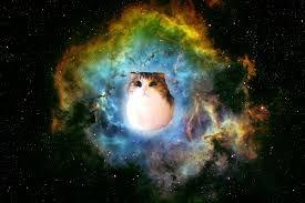 Pin By Romola Hunter On Wallpaper Cat Wallpaper Galaxy Wallpaper Cat Lovers