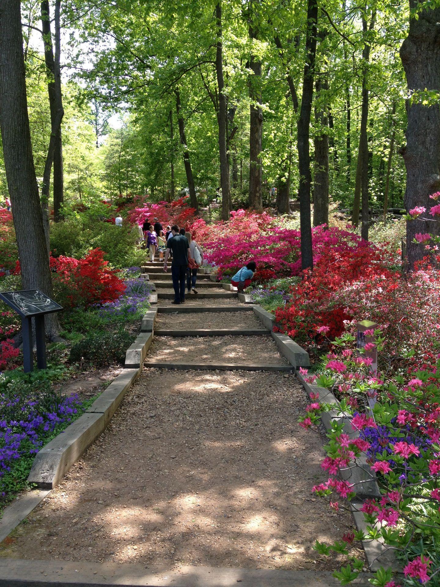United States National Arboretum Washington Dc Travel
