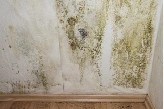 Pin On Diy Mold Removal