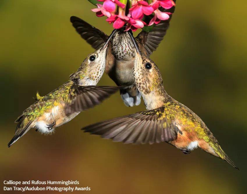 Pin by Teresa Yarbrough on Bird Watcher in 2020 Audubon
