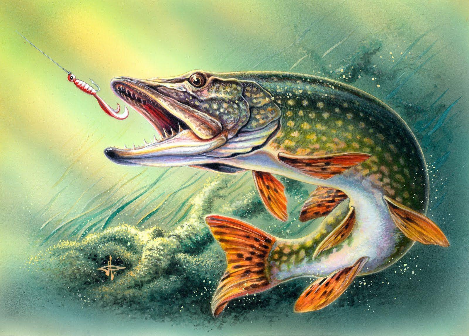 Freshwater fish art - Saltwater Fish Art Pike Fish Pike Is A Species Of Freshwater Fish That Is Native
