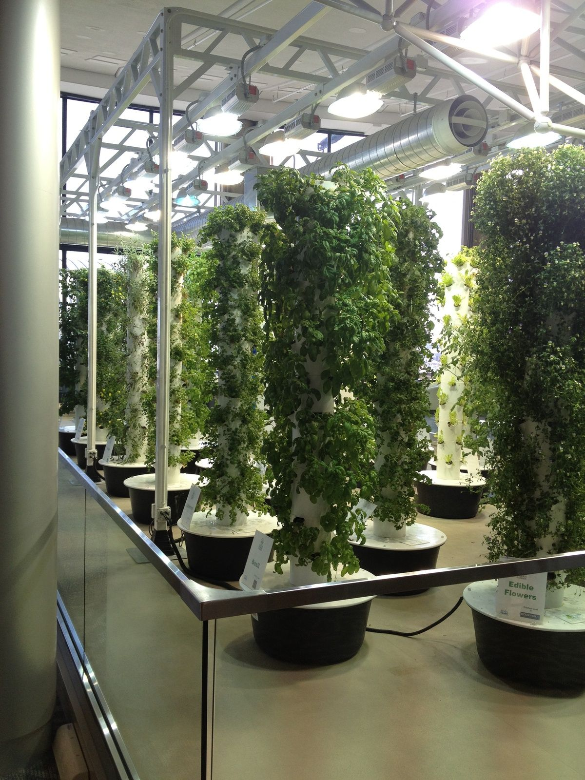 Hydroponic Garden In The Chicago Airport