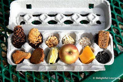 feeding squirrels dornr schengarten eichkatzerln squirrels pinterest tiere heimisch und. Black Bedroom Furniture Sets. Home Design Ideas
