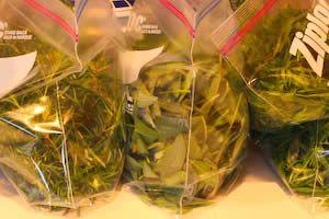 More About Freezing Fresh Herbs: Freezing Thai Basil, Sage, Tarragon, and Mint