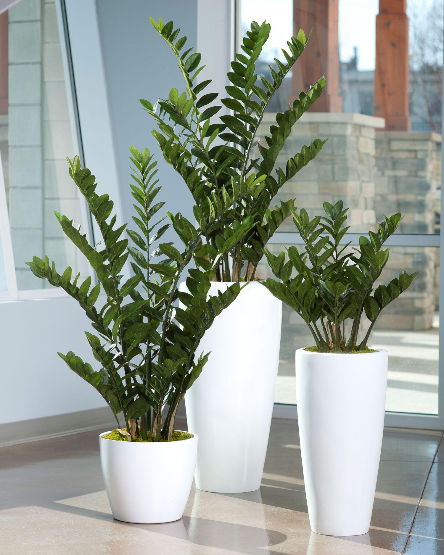 4 Zz Silk Plant Plantas Dentro De Casa Vasos De Flores
