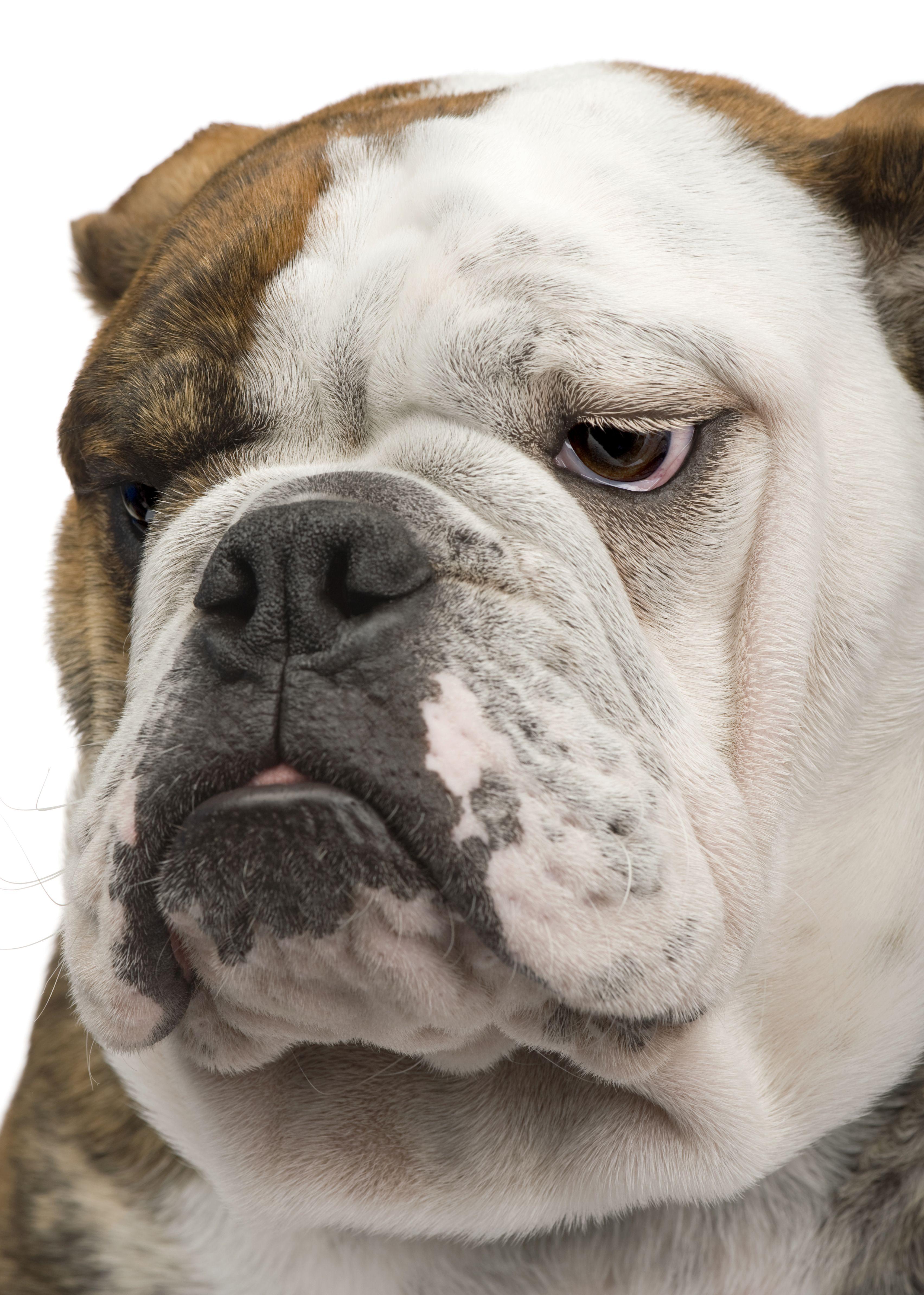 Pin On Downward Dog