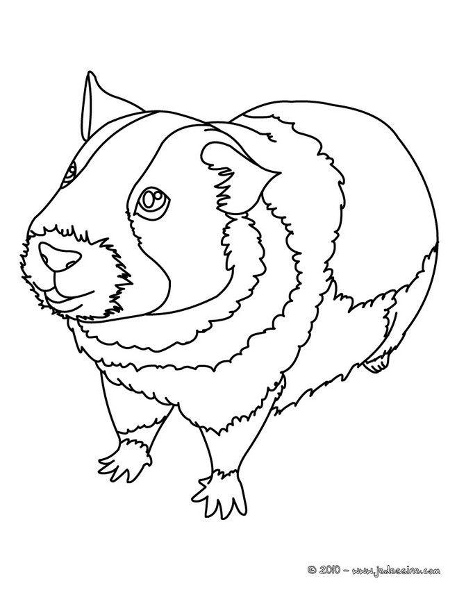 coloriage d un cochon d 39 inde r aliste sur ses quatre. Black Bedroom Furniture Sets. Home Design Ideas