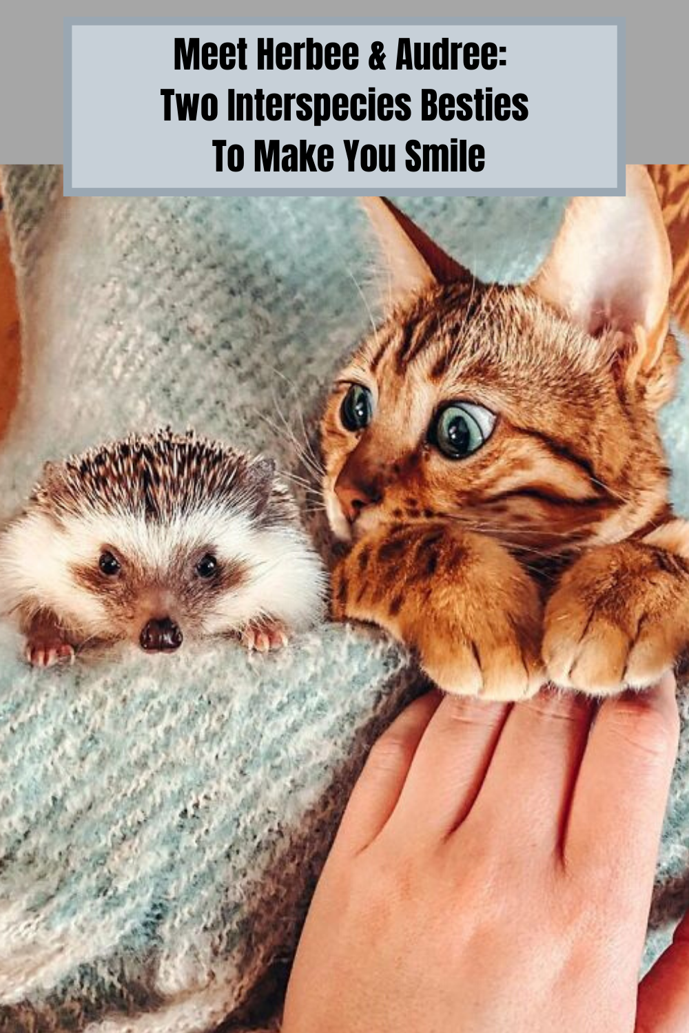Meet Herbee Audree Two Interspecies Besties To Make You Smile In 2020 Cute Cats And Kittens Pretty Cats Funny Cat Photos