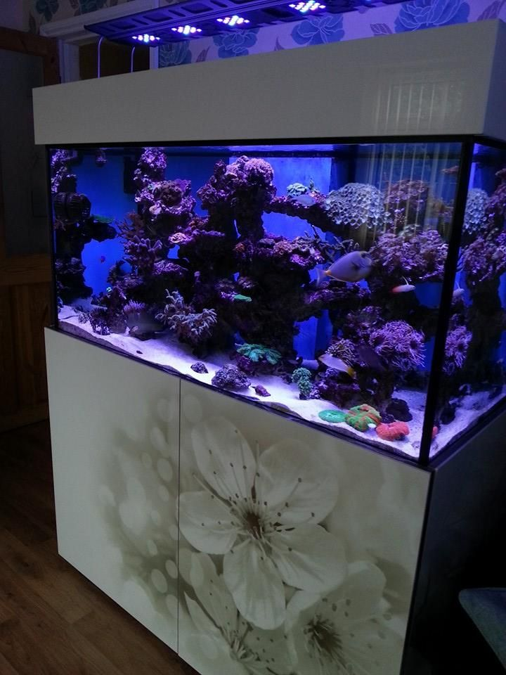 High Gloss White Marine Steel Frame Aquarium Custom