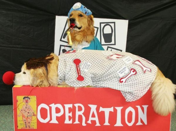 10 Funny Variations Of The Game Of Operation Pet Halloween