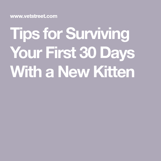 Tips for Surviving Your First 30 Days With a New Kitten
