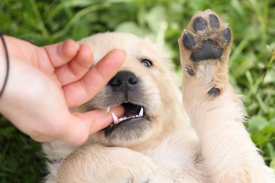 Q 1 How To Stop Biting Habits Of Your Dog Give Proper Training