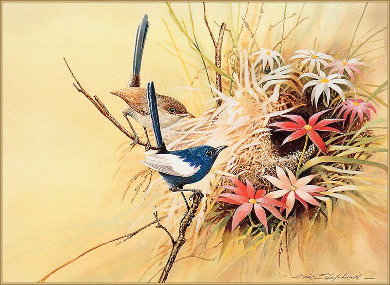 [Eric Shepherd's Beautiful Australian Birds Calendar 2003