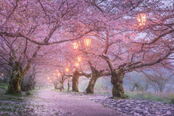 15 Razões para você não querer visitar o Japão | IPC DIGITAL