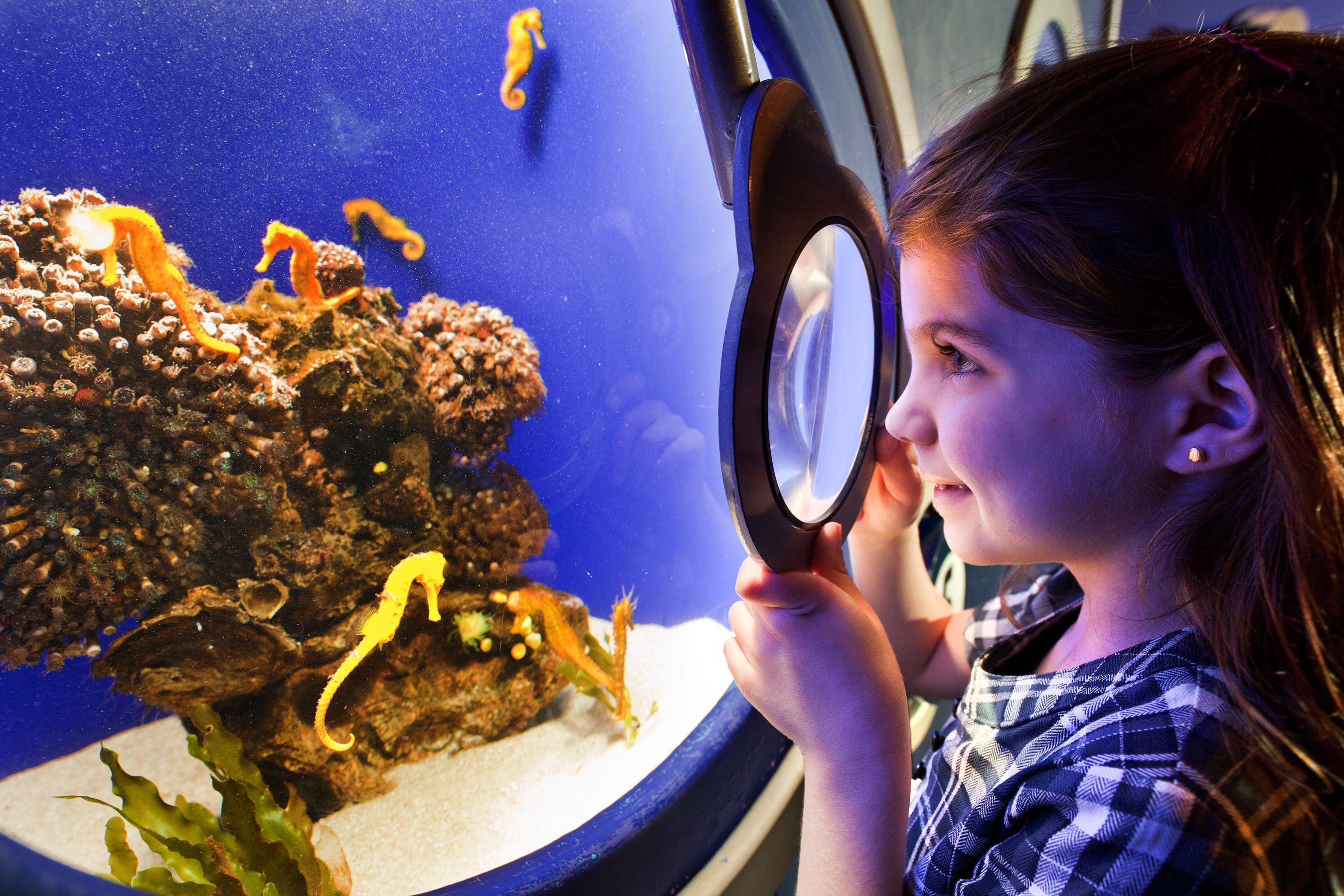 Giant Crab Osaka Aquarium japan