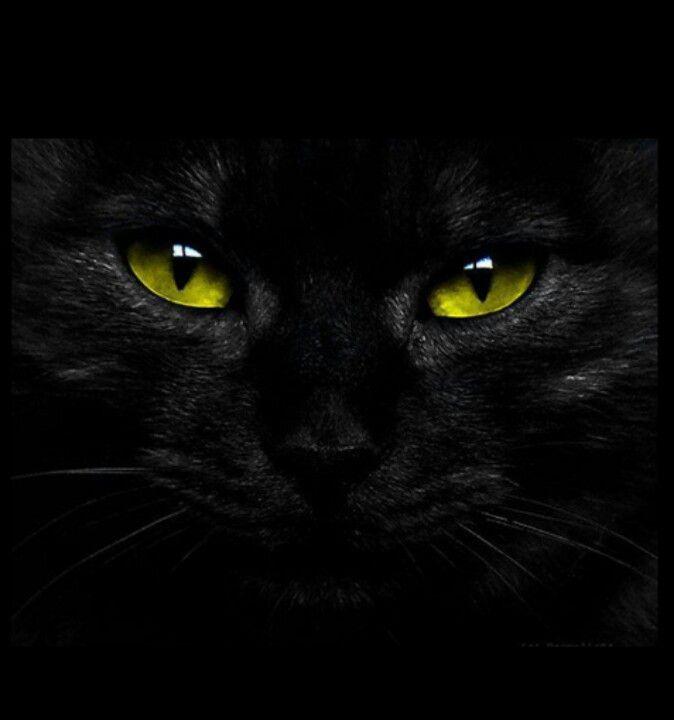 Cat Ebony Green Pic