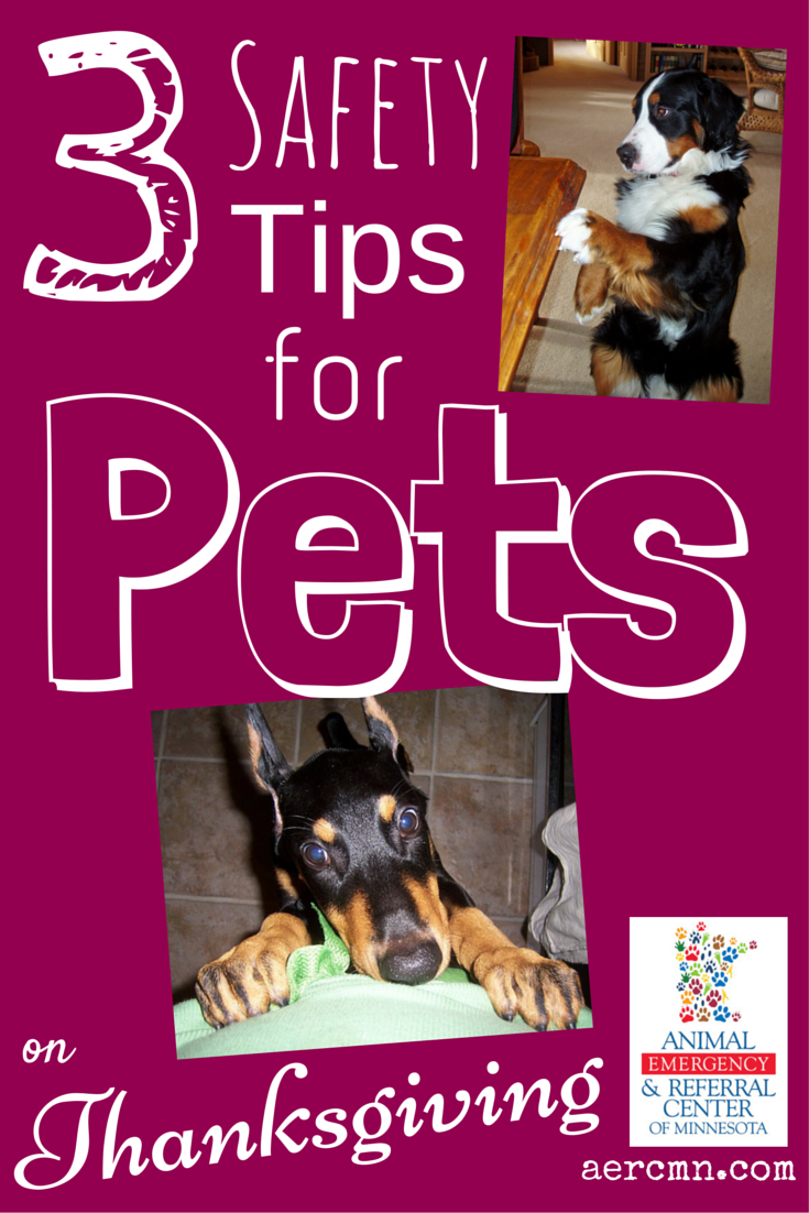 3 Tips For Keeping Your Pet Safe This Thanksgiving Pet Safe Pet Emergency Your Pet
