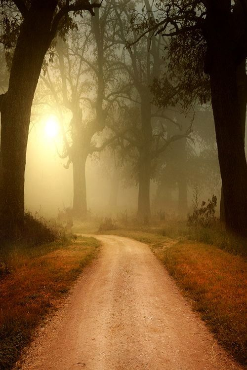gentle misty sun along the road
