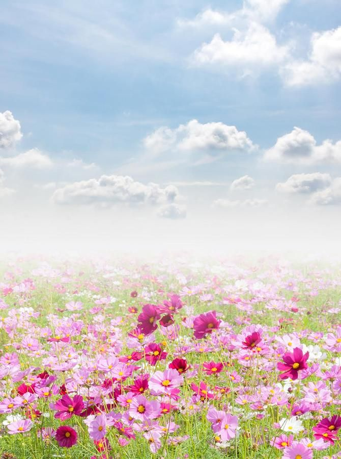 Garden 6x8 FT Photo Backdrops,Pink Daisy Blossoms Flowery Field Meadow Inspired Romantic Scenic Nature Print Background for Party Home Decor Outdoorsy Theme Vinyl Shoot Props Pink Black White