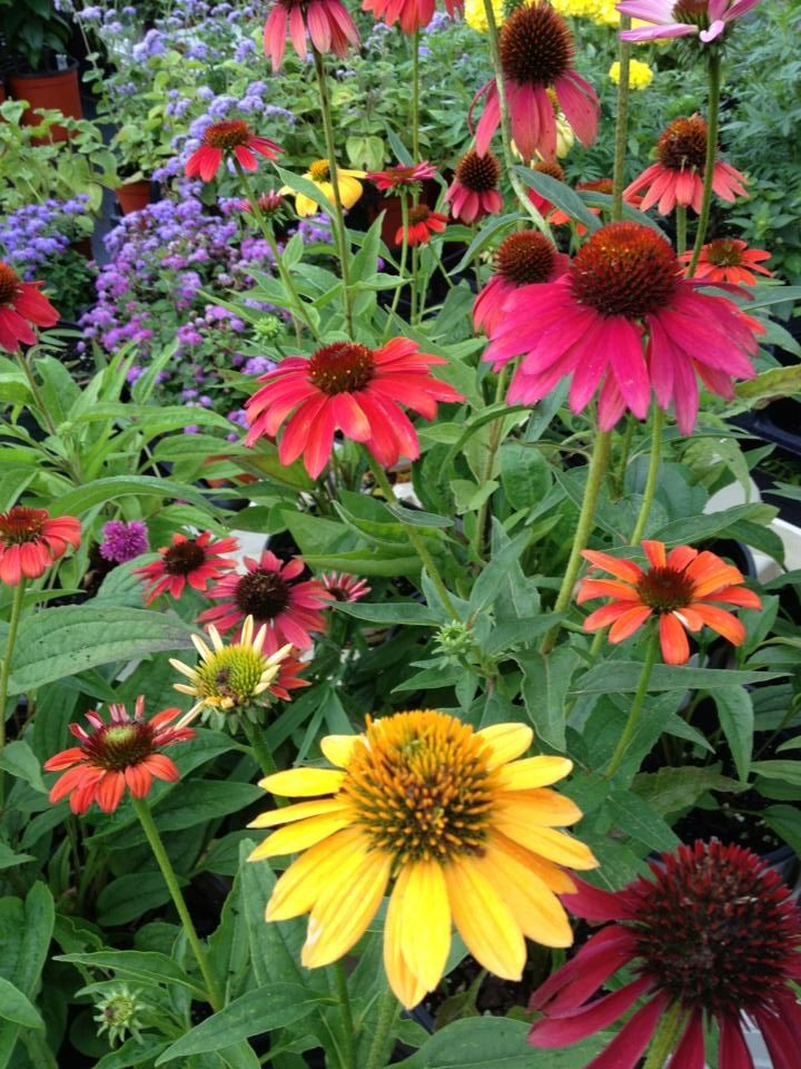 Pin on Farming & Gardening