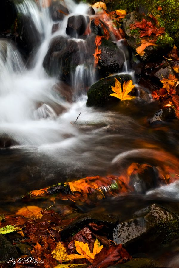 Washed Away by Steven Lamar Autumn - Columbia River Gorge