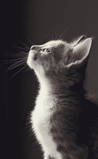 Free Image on Pixabay – Cute, Animal, Mammal, Cat, Nature