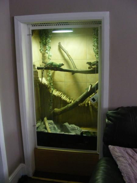 Cool Idea For A Chinese Water Dragon Set Up In A Closet The Bridge
