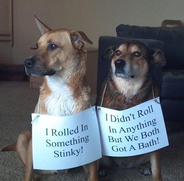 65 Cutest Pet Criminal Duos Smelly Dog Dog Shaming Cute Animals