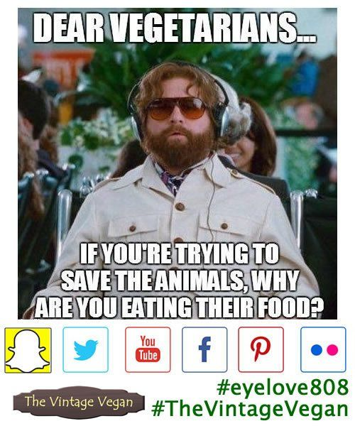 """The Vintage Vegan on Twitter: """"How do you respond to this one? Annoying things that vegans are often asked & tagged in #Vegan #FacePalmFriday #eyelove808 #TheVintageVegan https://t.co/RgQjvLfKDF"""""""
