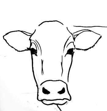 Step by step cow drawing face google search more