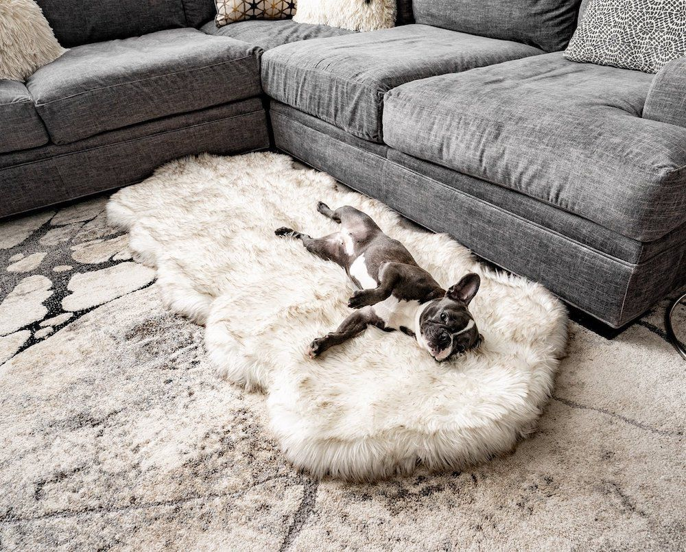 12 Stylish Pet Accessories Your Home Needs This Year
