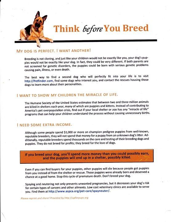 Think Before You Breed Dog Quotes Exactly Like You Animal Rescue