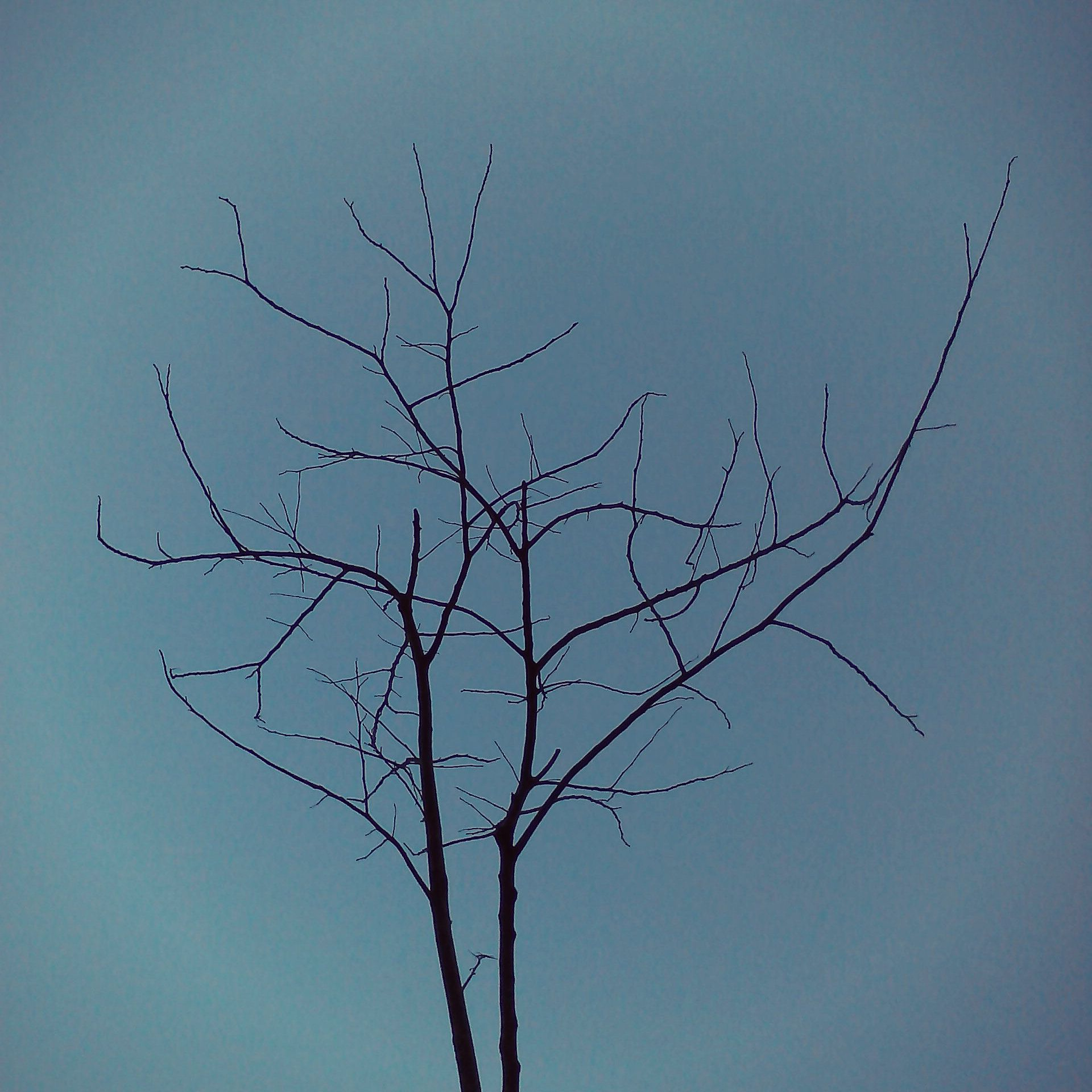 lines, branch sillouette, photography, sky